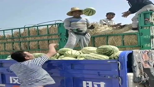 瓜农不容易,十几斤大瓜一扔就是几百斤,一斤一块真不贵!