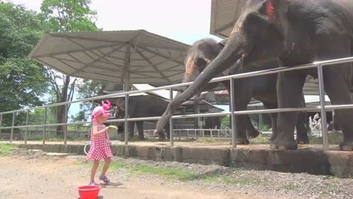 萌娃去动物园给动物们喂食物,小家伙玩的可开心了!