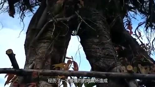 """倒着生长的树你见过吗?潜水员发现一座""""水下迷宫""""!"""