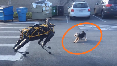真狗街头PK机器狗,下一秒笑到停不下来!