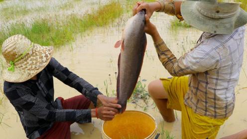 野外的水坑抓到了大货,这么大的野生鱼很少见哦