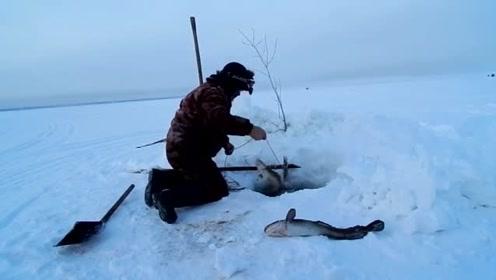 拉起冰洞里的绳子,大鱼一条接一条,真是太过瘾了