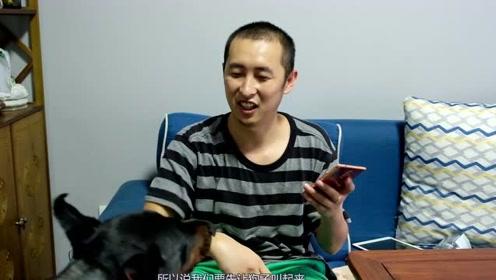 主人和狗子无障碍沟通技巧,测试翻译器等各种方法,还是这个管用