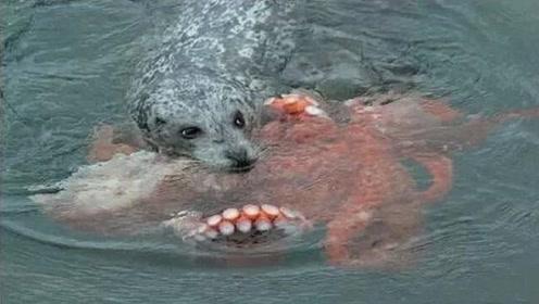 男子发现一只狗狗落水,正想去救它,走近一看掉头就走!
