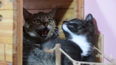 给超凶小野猫做个碗架,没想到它是这么报答我的