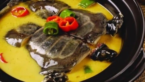 同样是带壳的,为什么人们只吃甲鱼而不吃乌龟?看完恍然大悟