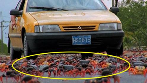 100多万只螃蟹横穿马路,突然一辆汽车驶来,场面一度失控!