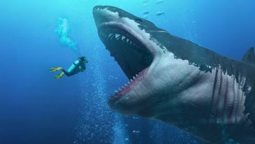 全球体型最大的鲨鱼,连鲸鱼都是他们的盘中餐,人类只够塞牙缝