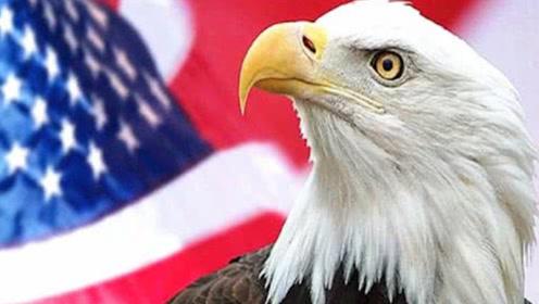 """美国的""""国鸟""""是白头鹰,澳洲是鸸鹋,那中国的国鸟是什么?"""