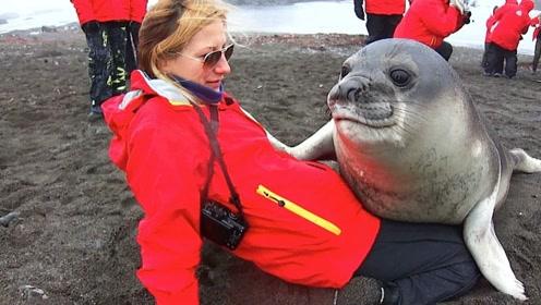 海豹把美女扑倒在地,又蹭又索吻的,让其他男性看红了眼!