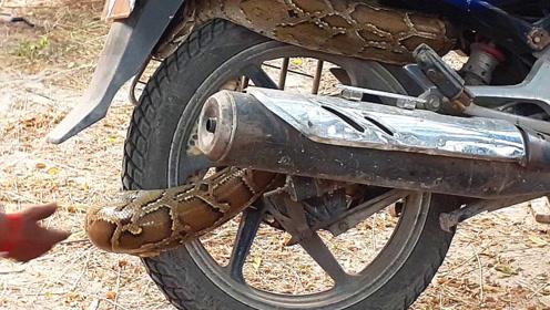 小伙发动不起来自己的摩托车,仔细检查之下,汗毛都竖了起来