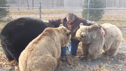 养三头熊是什么体验?国外大叔表示:跟养小狗没什么差别