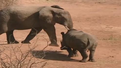5吨重犀牛挑战大象,想给大象来个下马威,镜头拍下全过程
