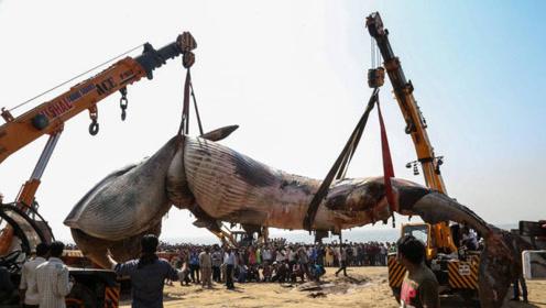 印度惊现10米鲸鱼尸体,村民纷纷上前围观,得知真相令人泪目!