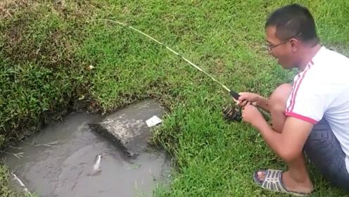 小小的下水道出口竟有大鱼,男子拉着拉着就大笑起来了