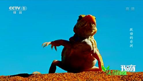 听说霹雳舞也入选奥运了,派蜥蜴去也不错