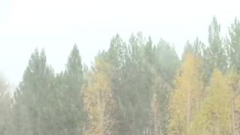 """黑龙江漠河:""""我这里下雪了,比2018年提前25天!你呢?"""""""