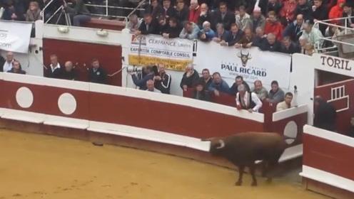 一头斗牛刚被放出来,就直接朝护栏跑去,下秒大家憋住别笑