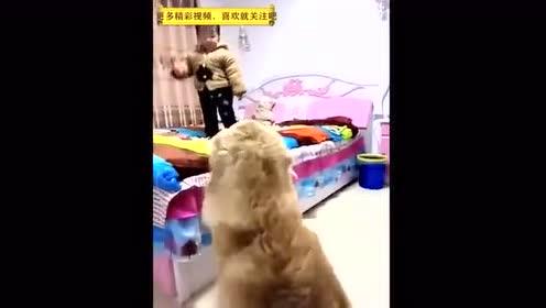 主人让狗狗在家看住小主人,金毛点头好,结果回来居然是这样子.