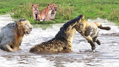 狮子鳄鱼哪个更厉害?我敢打包票,知道真正答案的没几个!