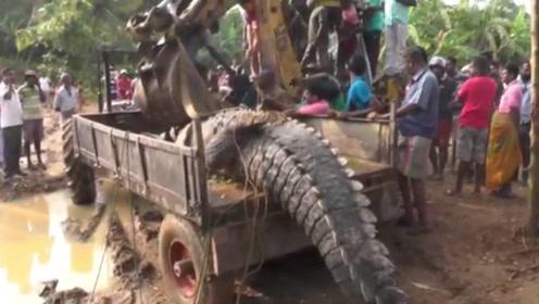"""村民从河里捉到""""大怪物"""",请来拖拉机都装不下,最后只能放生了"""