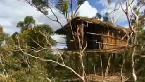 """世界上最""""原始""""的部落,男人一生都住树上,交流方式靠竹竿!"""