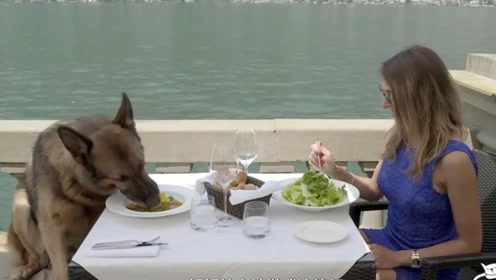 人不如狗系列,继承主人25亿的财产,出门有豪车 吃饭有美女!