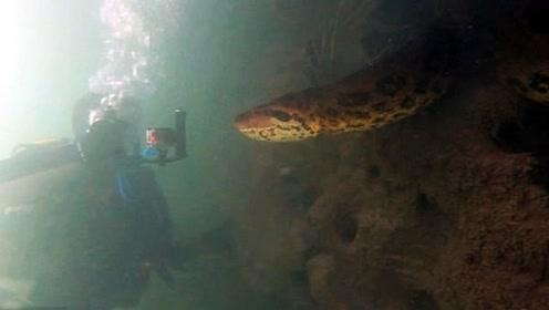 巴西一潜水者水下与7米长的绿水蟒面对面
