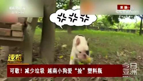 """可敬!减少垃圾 越南小狗爱""""捡""""塑料瓶"""