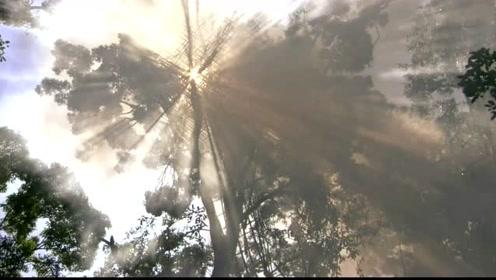 """世界上最""""神秘""""的部落,生活在30米高的树上,回家全靠爬!"""