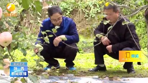 """""""秋淋持续""""对农业生产利弊兼具,陕西各地应科学应对分类施策"""