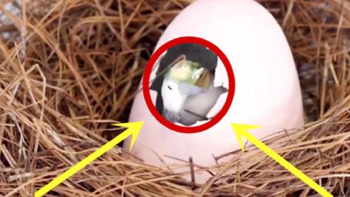 """男子捡到一颗奇怪的蛋,竟孵出""""独角兽"""",网友:这也太假了吧!"""