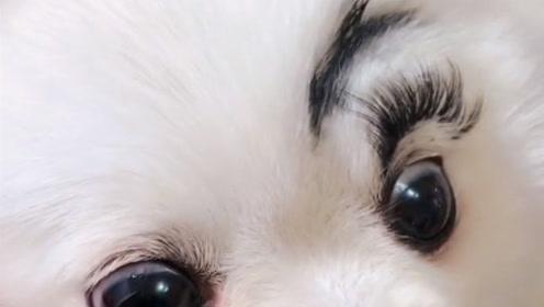 单身久了,怎么看一个狗狗都觉的眉清目秀了,得赶紧找对象了