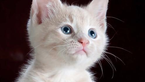 世界没有猫会怎么样,人类社会大混乱?看完不敢相信!