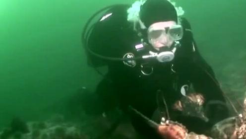 世界上最大的龙虾,重达40多斤,虾钳比人胳膊还粗