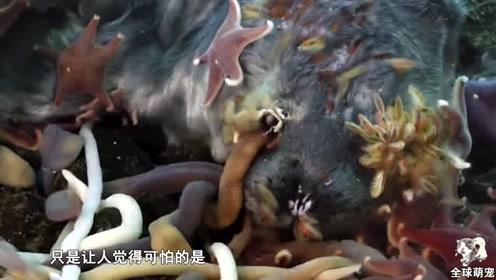 南极冰层下的恐怖动物,形状像蛇,镜头拍下罕见画面!