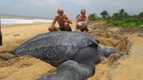 世界上体型最大的乌龟,体重可达1吨,它的嘴里藏着惊人秘密!