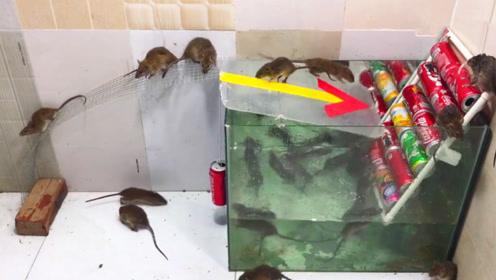 民间小伙设计的捕鼠器,老鼠刚踩上去,下一秒崩溃了!