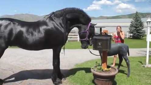 马儿对雕塑小马驹一见钟情,赖着不肯走,下一秒可要憋住不要笑!