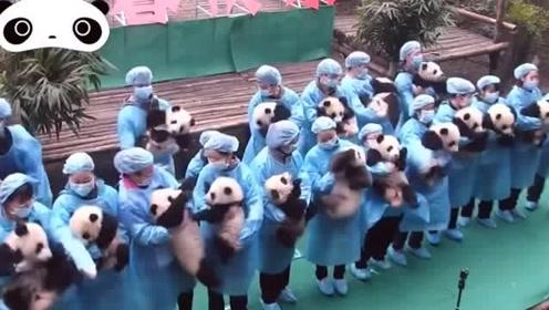 饲养员抱着熊猫宝宝集体亮相,场面一度失控,根本不听吆喝!