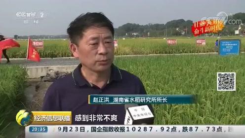 水稻生产高质量发展,这里的农民每亩增收500块钱