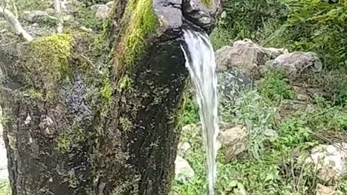 农村偶遇奇葩事,居然还有会流水的树枝,感觉好神奇的样子!