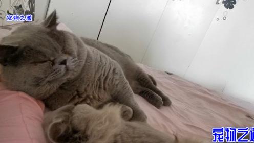 主人早晨一睁眼,发现床上趴着一堆猫,猫咪:有床要懂得共享