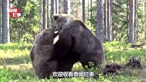 人在野外碰到熊,立马就装死能活命吗?看完不淡定了!