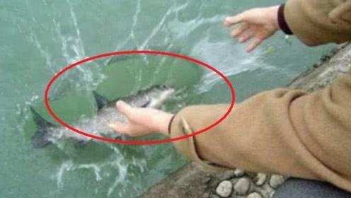 把淡水鱼扔进深海里,鱼会变成啥样?看完憋住别笑!
