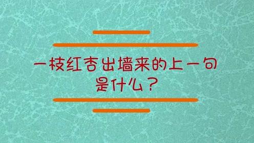 一枝红杏出墙来的上一句是什么?