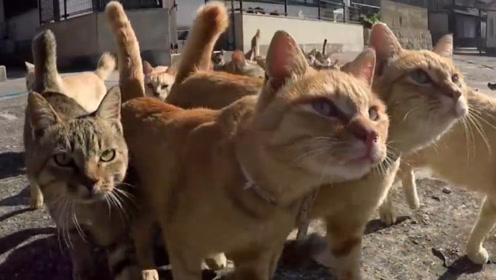 日本猫岛堪称猫奴圣地,人口不到17人,却有上百只猫!