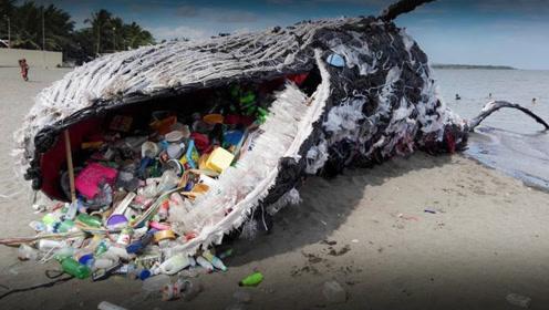 海滩发现5吨重鲸鱼,营救过程中鲸鱼爆炸了?看着尸体就心痛不已