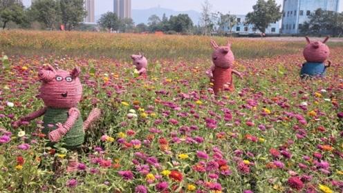 国庆假期杭州新打卡地 城北20万方花海浪漫开园