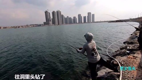 渔夫好不容易钓到大鱼,半途被海狼打劫,渔夫气得直拍大腿